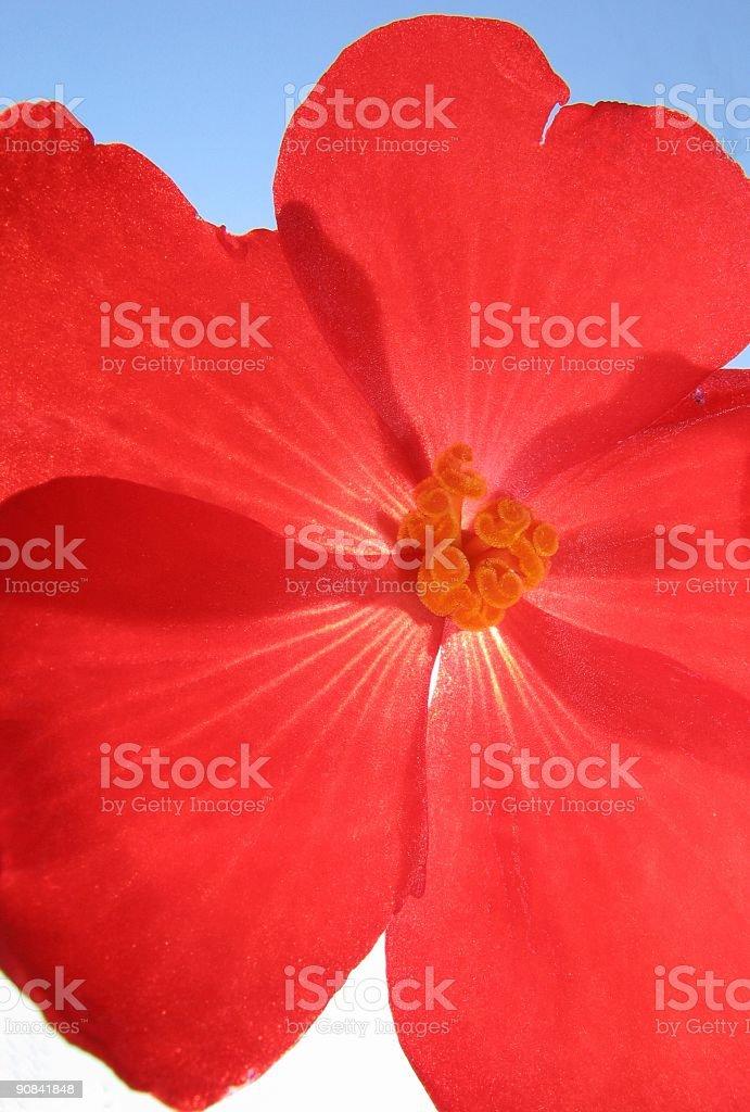 Bright Flower royalty-free stock photo