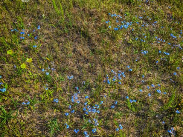 드문 잔디 가운데 성장 하는 밝은 꽃 스톡 사진