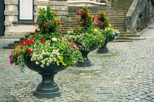 bright flowers in stone flowerpots - blumentopf groß stock-fotos und bilder