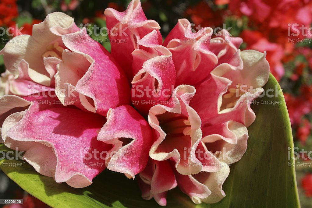 Bright flowers royalty-free stock photo