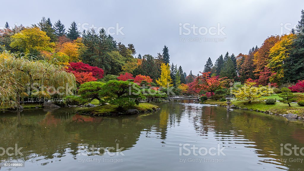 Bright forest on the lake. Autumn in the park. stock photo