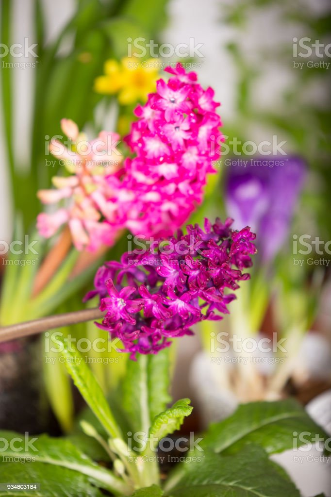 밝은 신선한 봄 꽃 - 로열티 프리 0명 스톡 사진