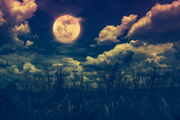 Bright full moon above wilderness area, serenity nature background. stock photo