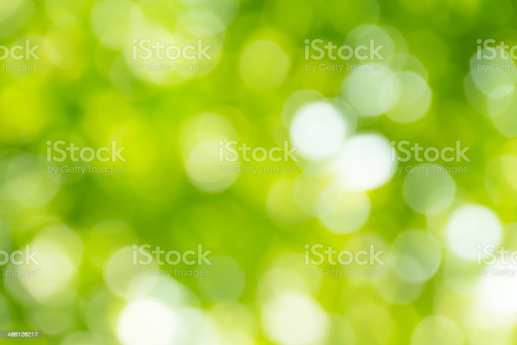 bright green and white blur bokeh abstract light background stock photo