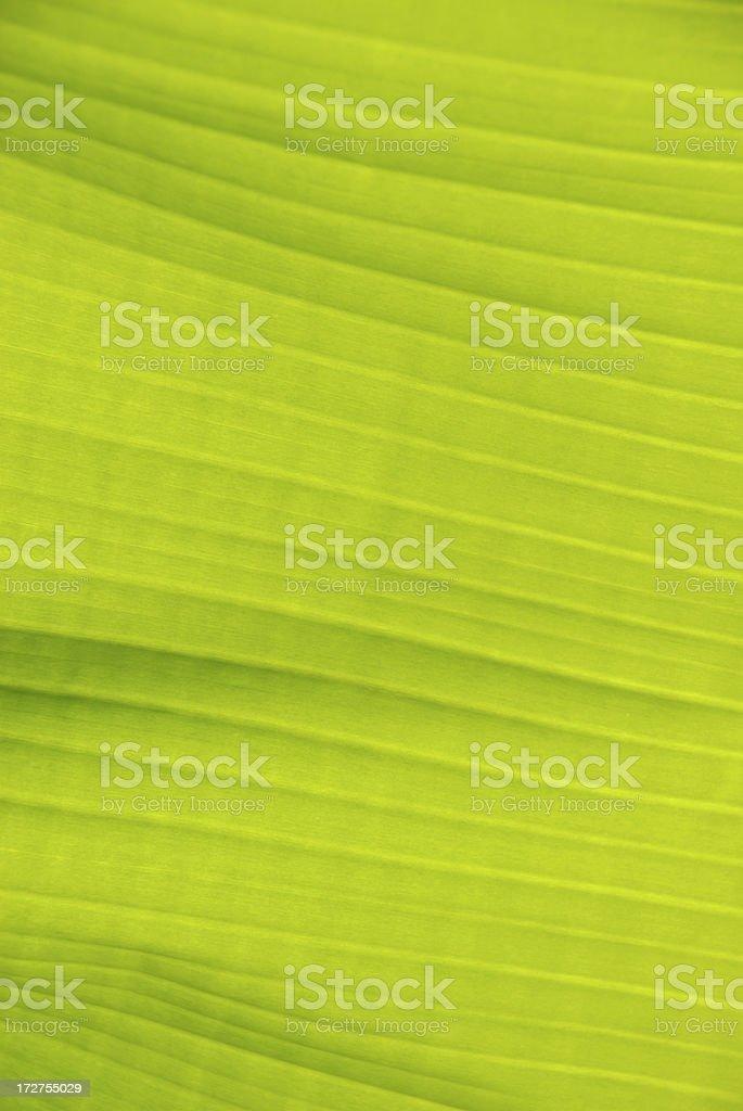 Bright Green Banana Leaf Background Full Frame stock photo