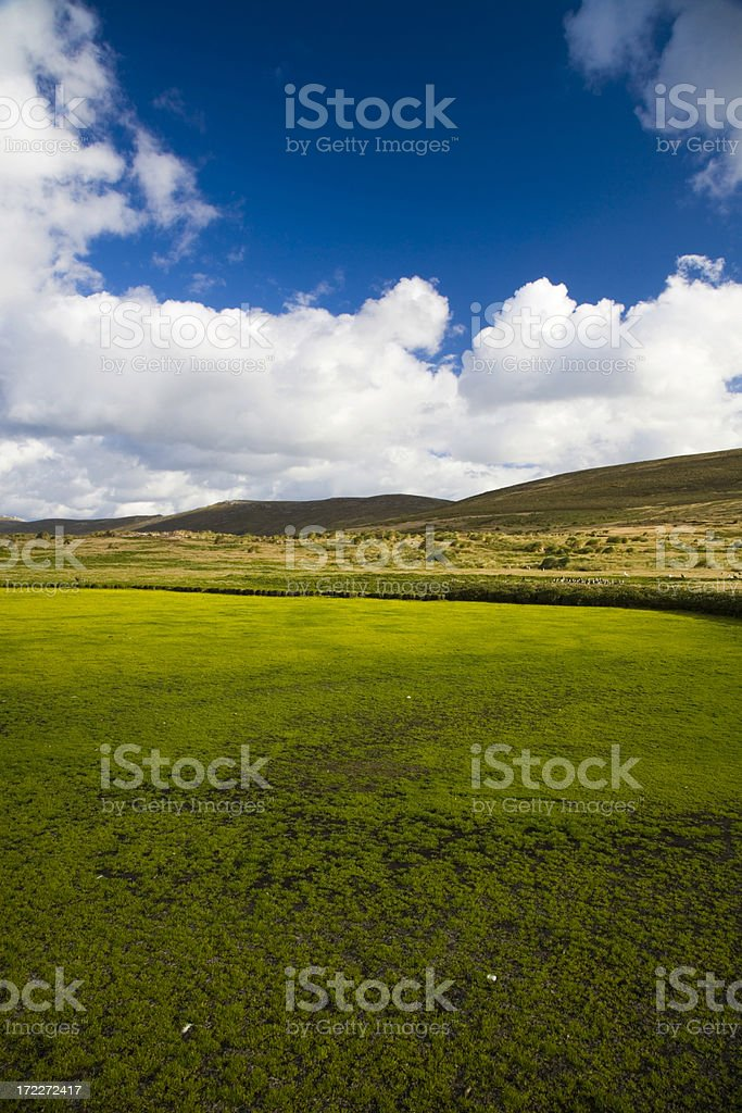 Bright Green Falklands royalty-free stock photo