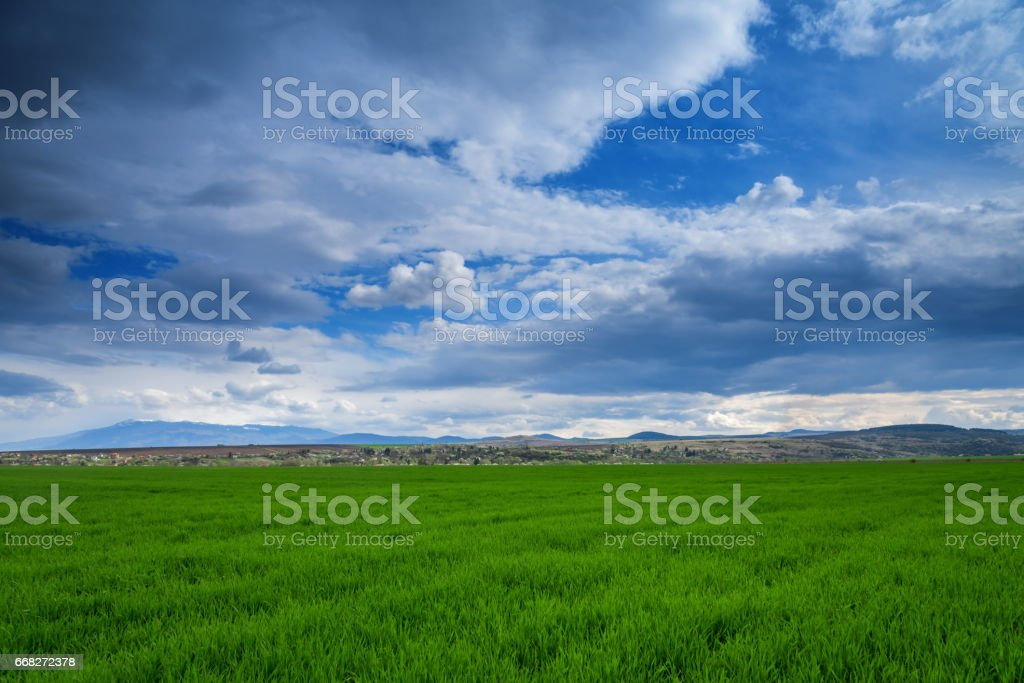 bright green field under a sky with clouds foto stock royalty-free