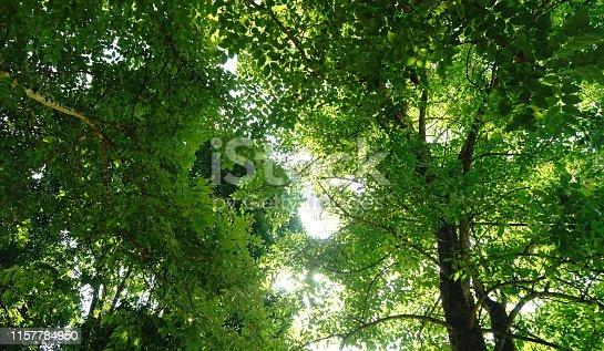 Sky, Springtime, Wind, Forest, Summer