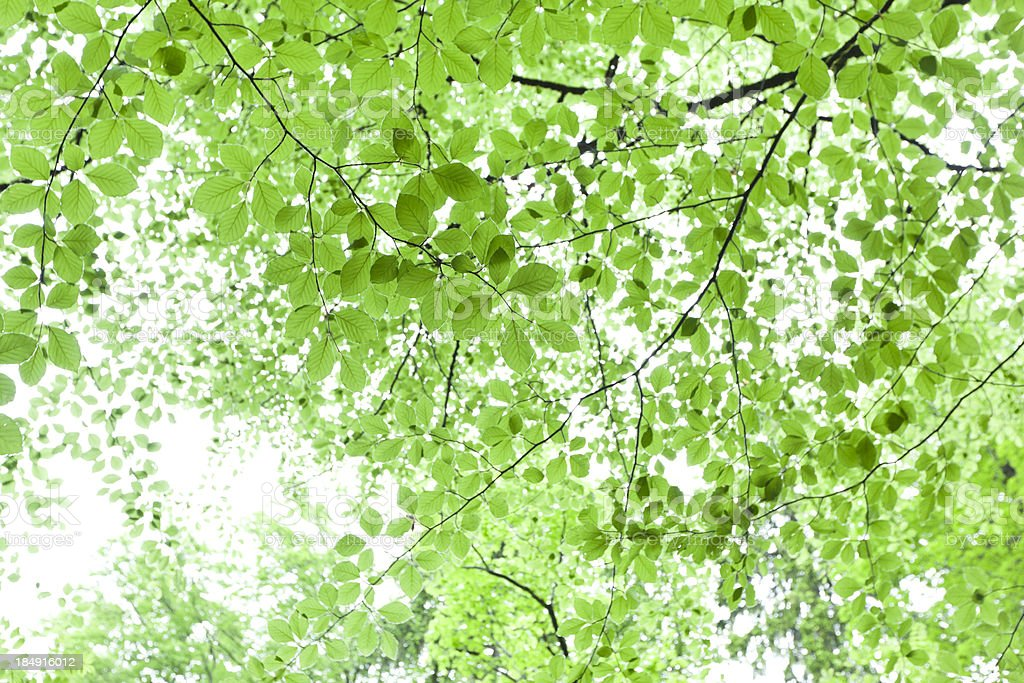 Bright green foliage background stock photo