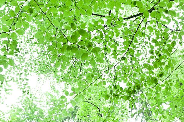 Follaje verde brillante fondo - foto de stock