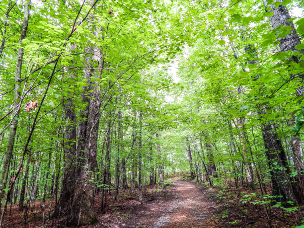 Bright Green Forested Walkway stock photo