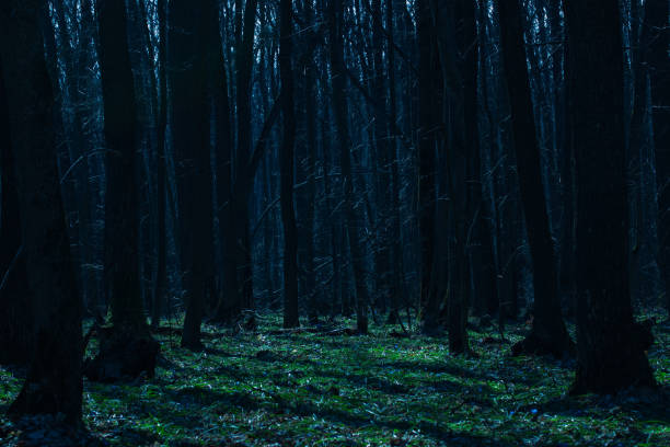bright green glade in the night forest with densely growing tall trees mysterious atmosphere no one around stock photo