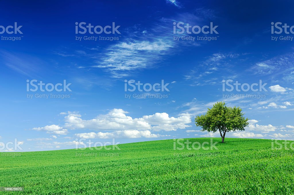 Bright green grass, a partly cloudy sky, and a lone tree royalty-free stock photo