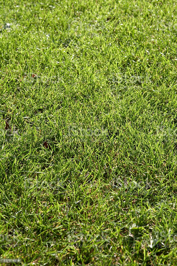 Bright Green Grass royalty-free stock photo