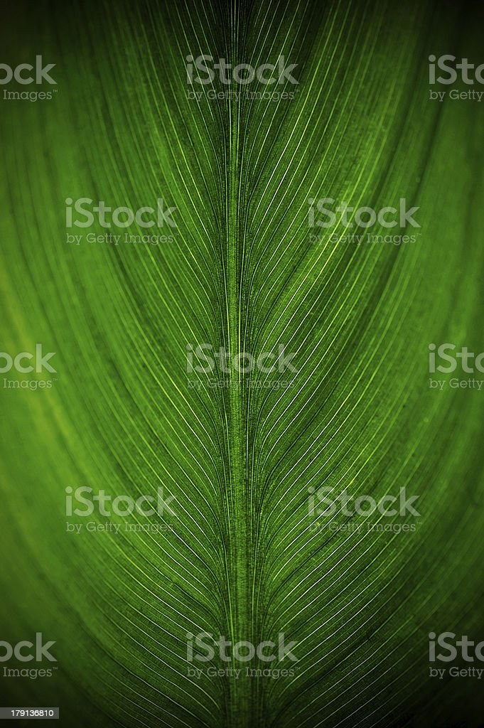 bright green leaf  close up, texture royalty-free stock photo