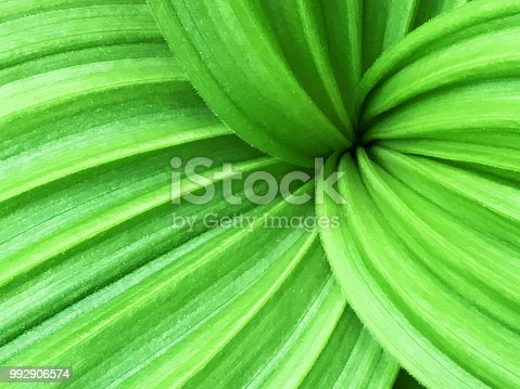 istock Bright Green Leaf Growth Nature Abstract Background 992906574