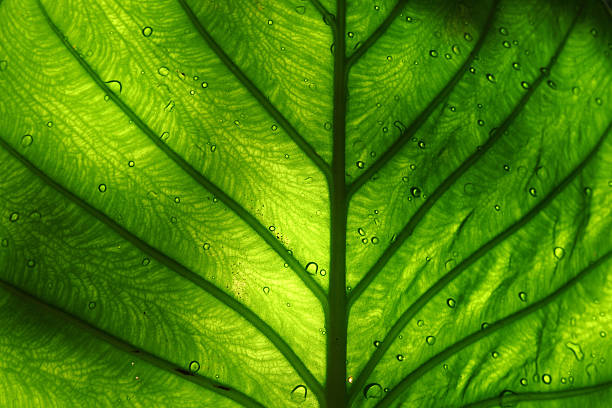 Feuille vert vif - Photo