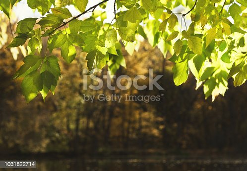 Border of bright green leaves on the branches in the forest