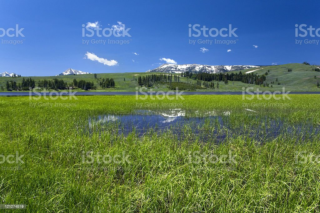 Bright Green Meadow and Blue Skies royalty-free stock photo