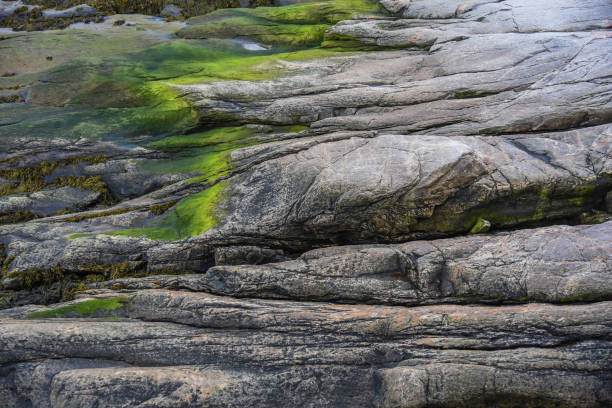 bright green moss on rocky shoreline - granite rock stock photos and pictures