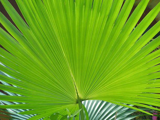 Bright Green Palm Leaf stock photo