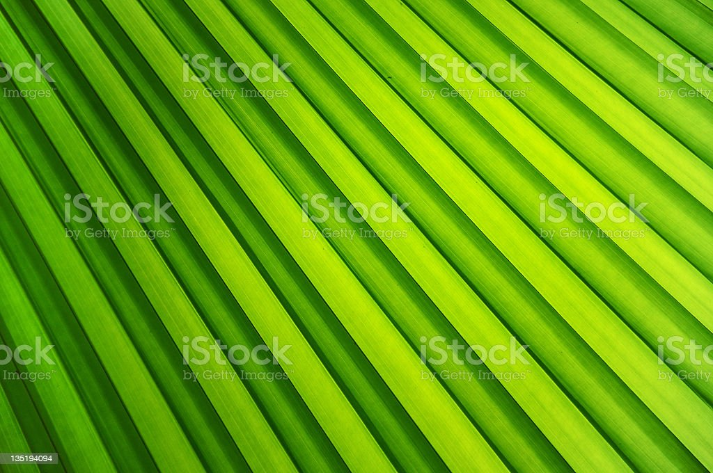 Bright green palm leaf texture royalty-free stock photo