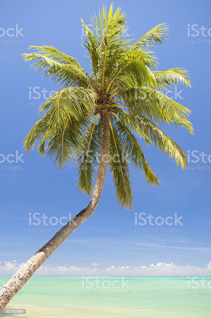 Bright Green Palm Tree Angles Over Turquoise Seas stock photo