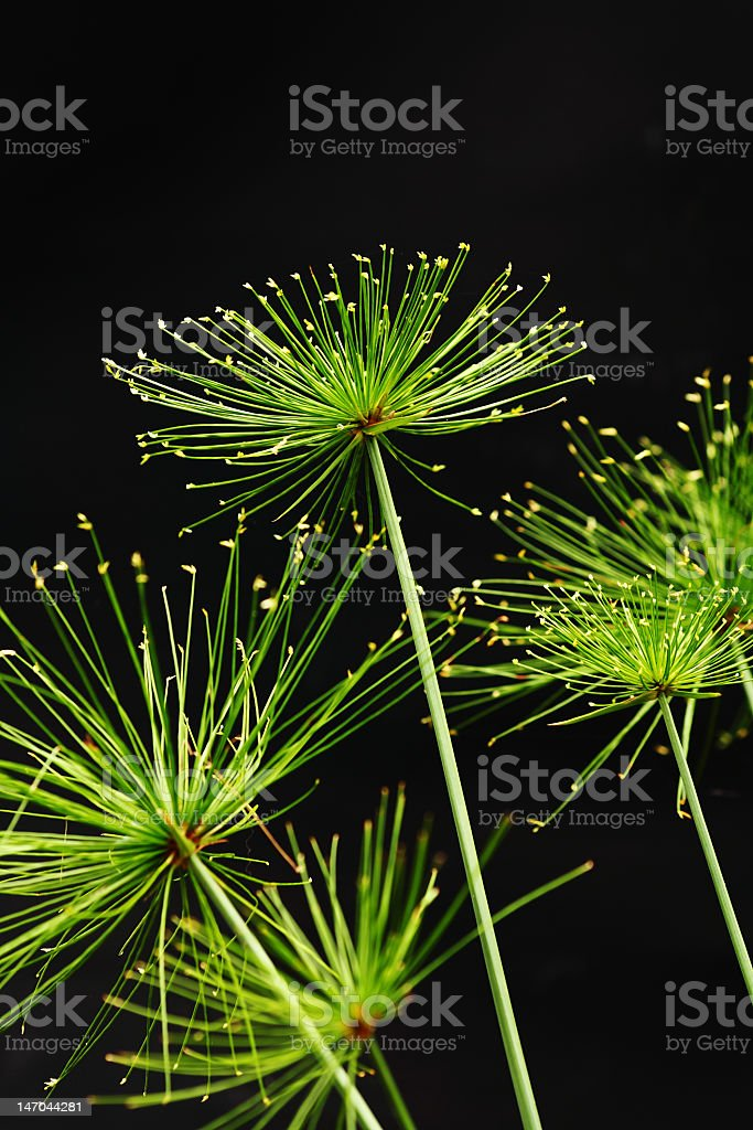 Bright green plants on a black background stock photo