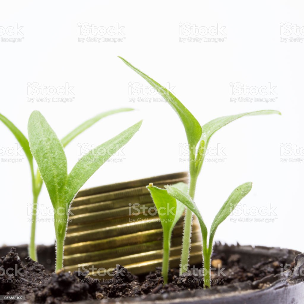 bright green sprouts grow in the ground and behind them lie coins in blur stock photo