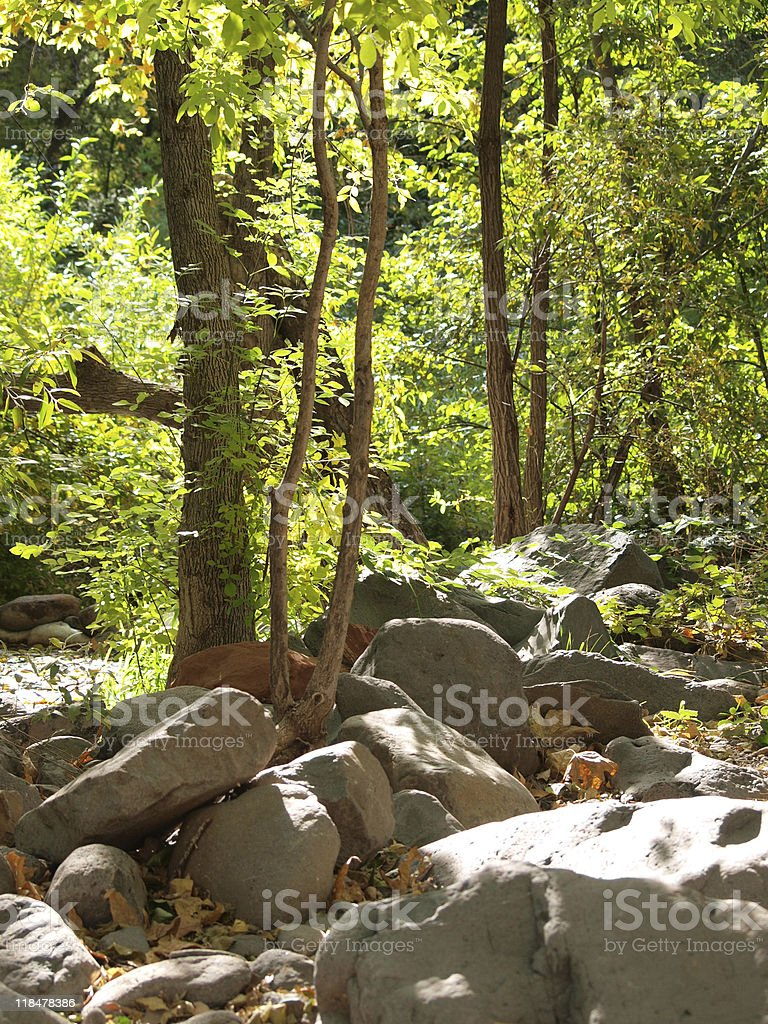 Bright green trees tower over grey boulders royalty-free stock photo