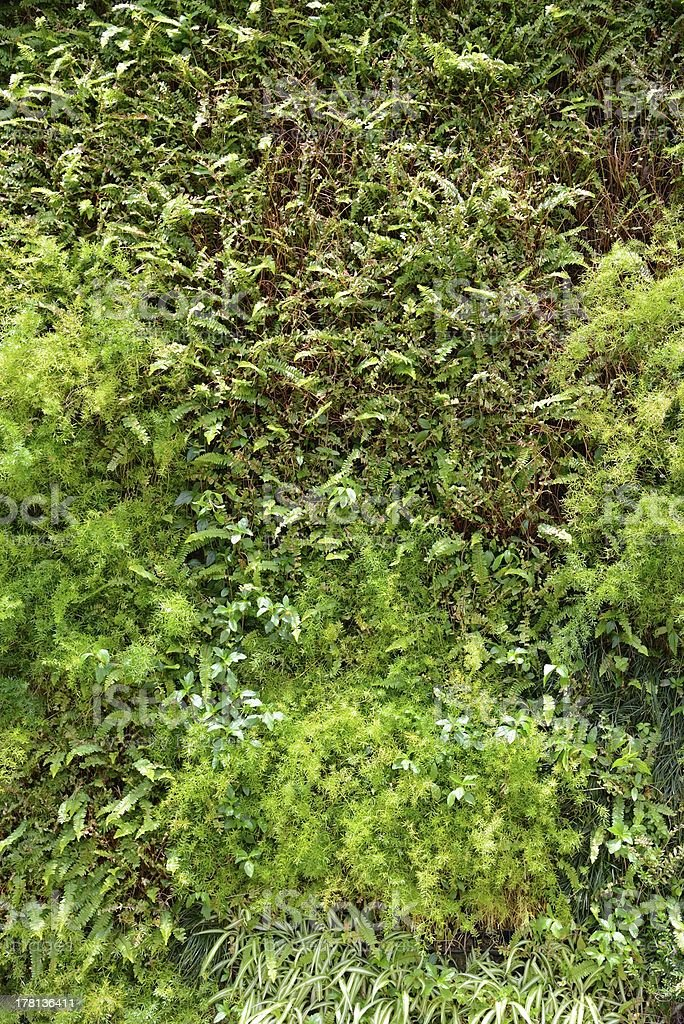 Bright Green Vegetal Wall Or Living Wall For Home Or Office Royalty Free  Stock Photo