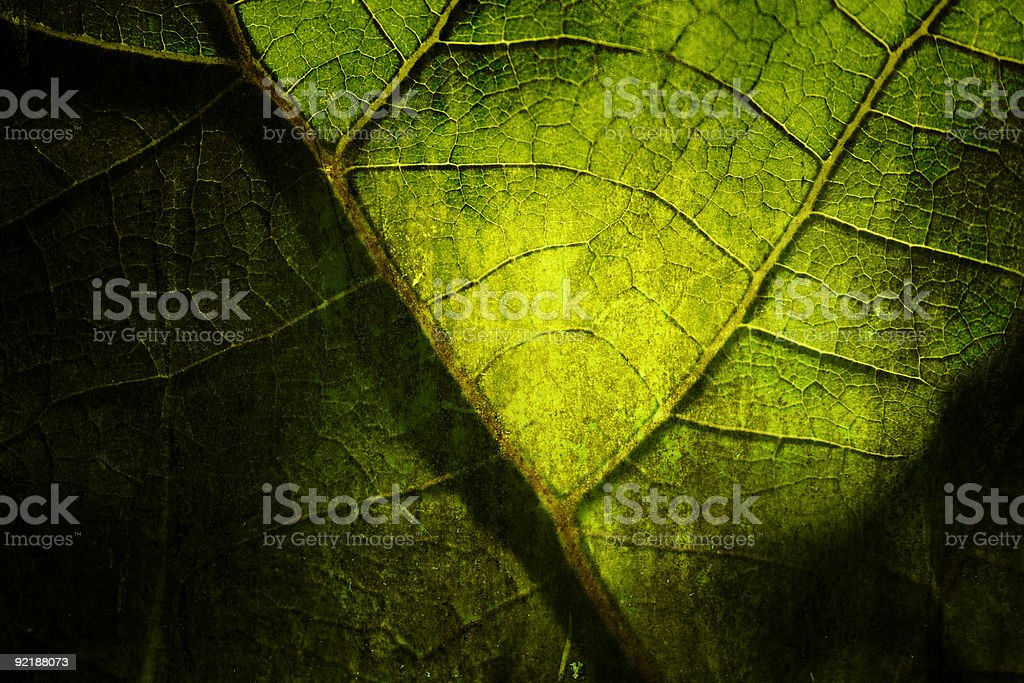 bright grunge wooden mix with leafs royalty-free stock photo