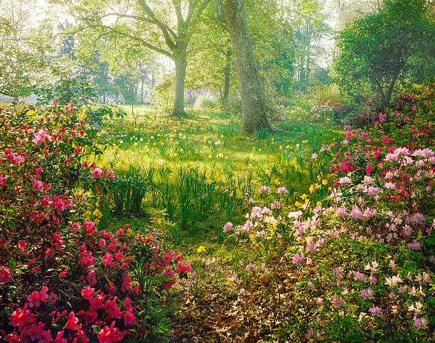 bright hazy sunlight through azalea and daffodil garden - ethereal stock pictures, royalty-free photos & images