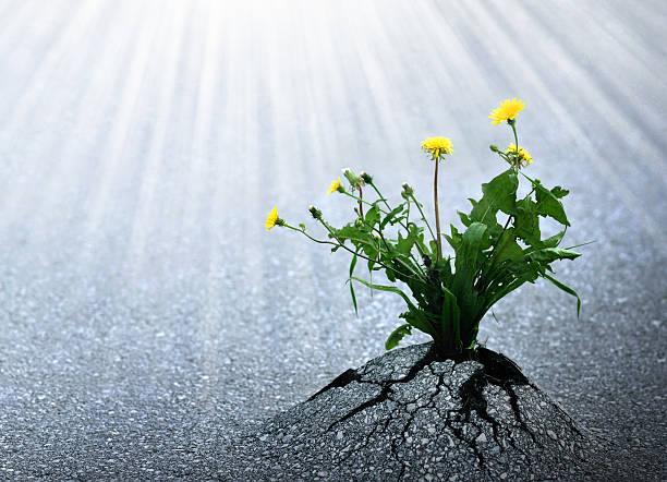 Bright Hope of Life bildbanksfoto