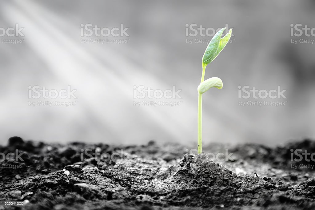 Plants emerge though asphalt, symbol for bright hope of life and...