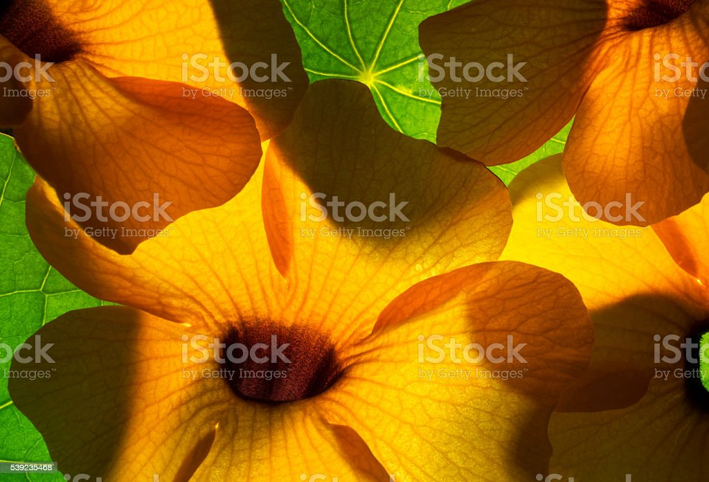 Bright illuminated orange flowers with green leaves. royalty-free stock photo