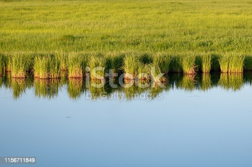 Coast of the river at sunset. Smooth water surface with grass reflection. Bright image with green reed plants reflected in the mirror smooth water surface of a small river