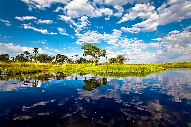 Bright landscape view of Okavango Delta, Botswana stock photo