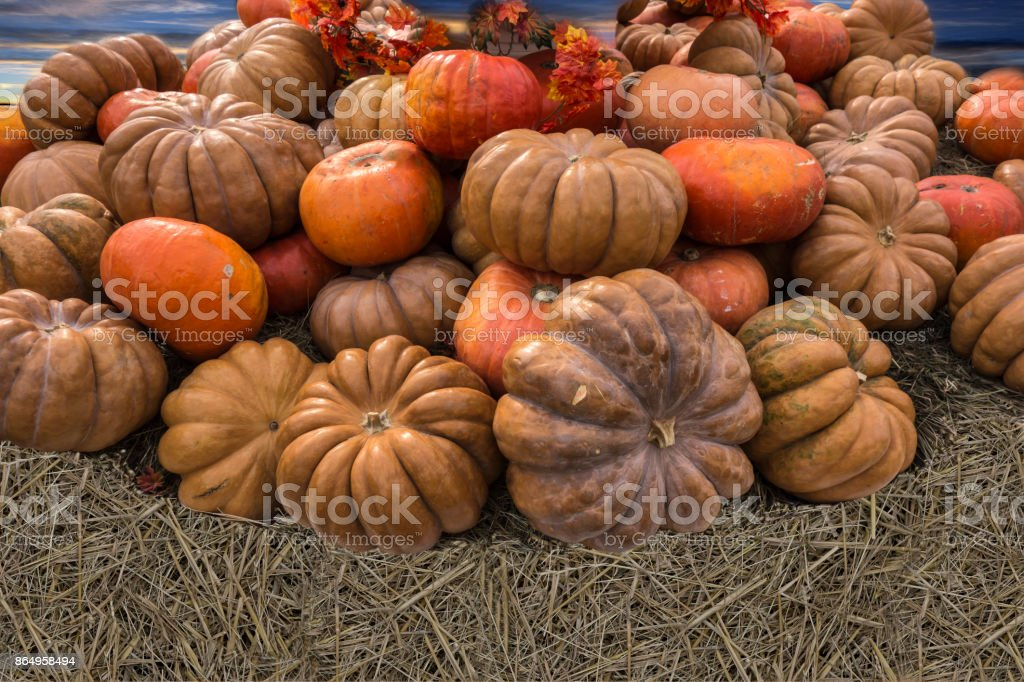 Bright large beautiful pumpkins under a blue sky stock photo