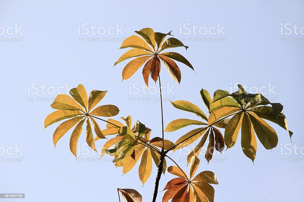 Bright Leafy Umbrella stock photo