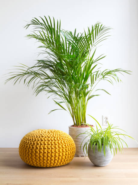 Bright living room with houseplants and knitted pouf on the floor stock photo
