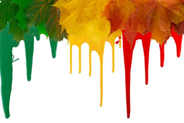 hojas de arce brillante con pintura con manchas en el borde superior del marco. copiar espacio - foto de stock