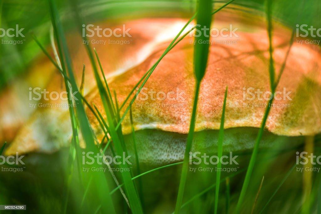 Brilhante pode Flora - Foto de stock de Brilhante - Luminosidade royalty-free