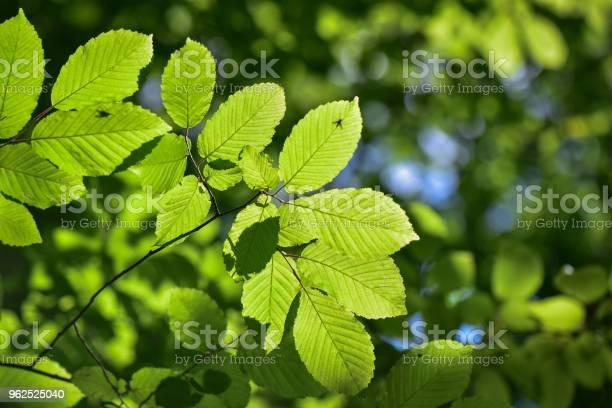 Foto de Brilhante Pode Flora e mais fotos de stock de Brilhante - Luminosidade