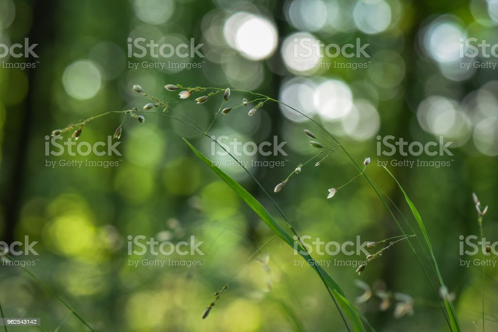 Bright May Flora - Royalty-free Agricultural Field Stock Photo