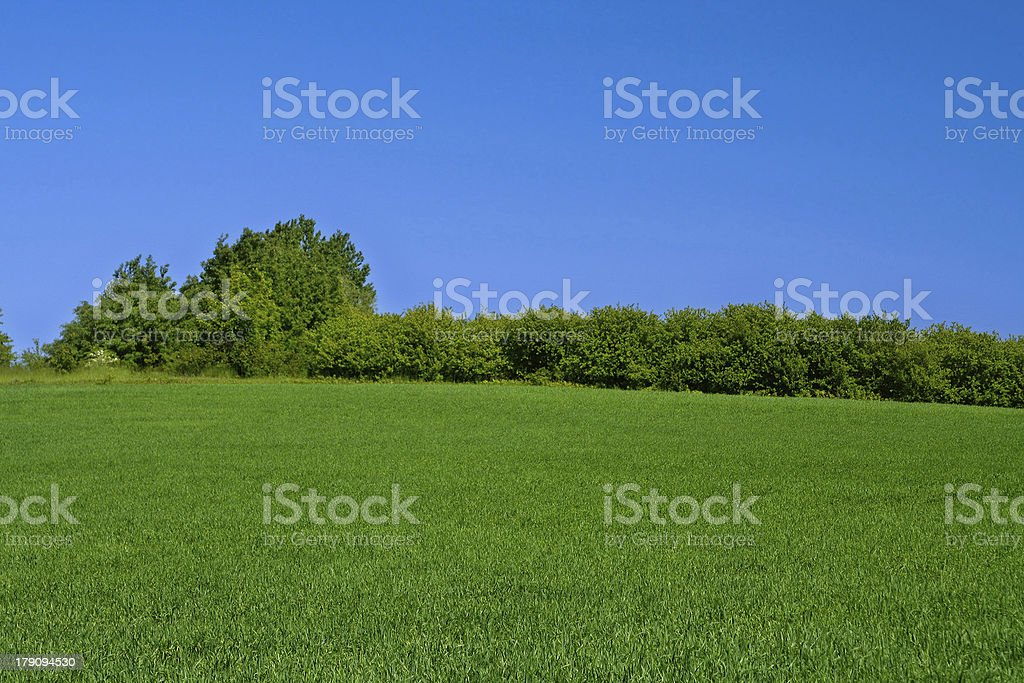 bright meadow royalty-free stock photo