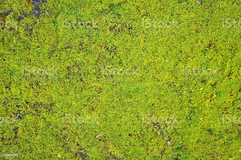 Bright Moss royalty-free stock photo