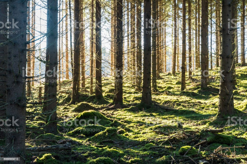 Bright mossy forest stock photo