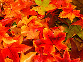 A full frame abstract background image of fallen autumn leaves with bright vibrant red, yellow, orange, green and purple color variations.