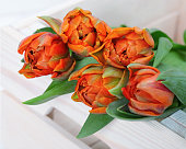 Bright natural tulips flowers bouquet in white wooden box. Copy space. Orange  tulips.